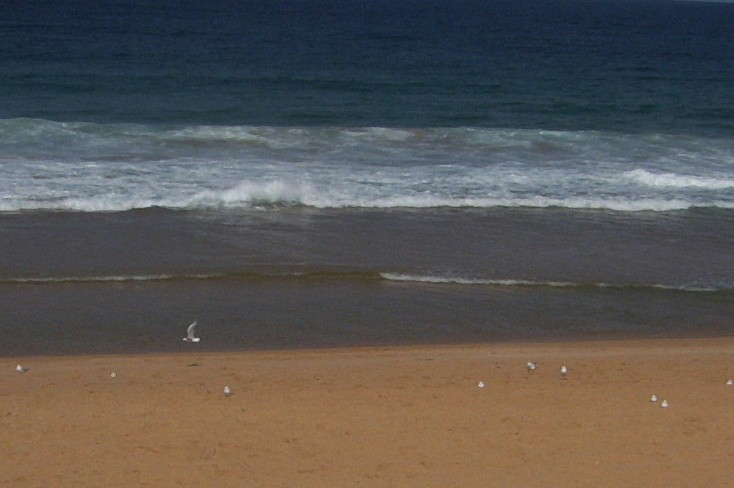 Narabeen gulls - I need more zoom