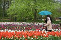 Keukenhof 2010 (54)