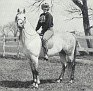 AL MARAH GRANDEE #14586 (Al-Marah Indraff x Silver Grand, by Grand Royal) 1959-1970 grey stallion bred by Bazy Tankersley/ Al-Marah Arabians; sired 31 registered purebreds
