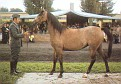 *CARMINA PASB #442453 (Woroblin x Cartagena, by Muharyt) 1983 grey filly bred by Bialka; imported to the US 1988 by Lasma East International