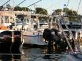 DSCN1727  Fishing boats jammed together, Oak Bluffs