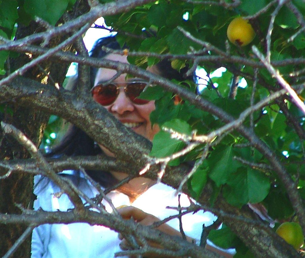 Alex peeking through the apricot tree