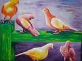 Quelques pigeons.