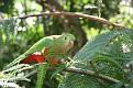 Birds Australia Zoo (41)