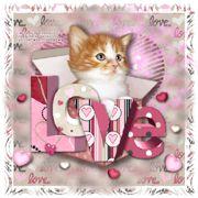 LoveMyKitty