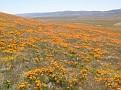 Poppy Reserve2008 040.jpg