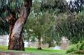 Bicentennial River Park 030312 1054 am