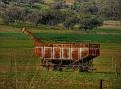 Wellington to Mumbil Farm 009 Field bin