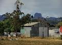 Bungles from Tooraweena Road 005