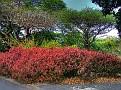 Brisbane Botanic Gardens 007