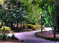 Brisbane Botanic Gardens 013