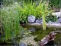 DSCN1557 Plantedammen 05 08 12