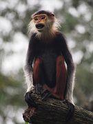 Singapore Zoo Parks 14