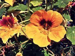 Orange aber nicht Cox Orange :o)