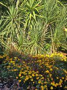 Blumen bei der Heidenmauer