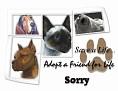 dcd-Sorry-Adopt a Friend.jpg