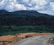 Dirt Road Leading To Ben Het