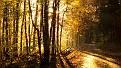 forest-wallpaper-1920x1080-021