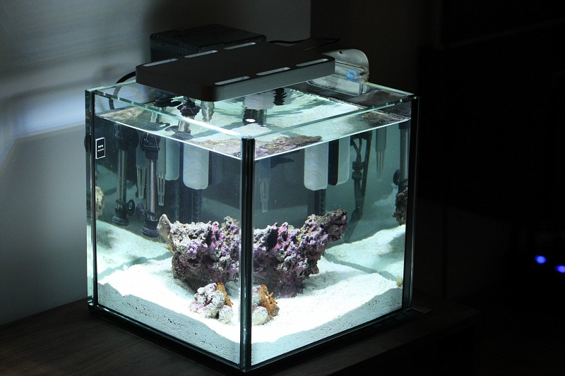 Saltwater aquarium 5 gallon nano reef leonel619 5 gallon for 5 gallon glass fish tank
