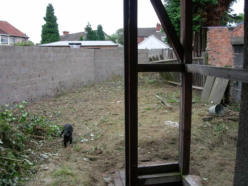 View from the back door