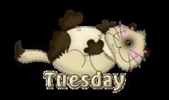 DOTW Tuesday - KittySitUps