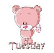 DOTW Tuesday - ShyTeddy