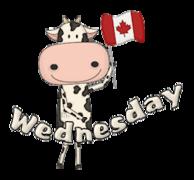 DOTW Wednesday - CanadaDayCow