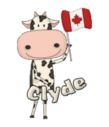 Clyde - CanadaDayCow