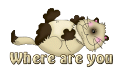 Where are you - KittySitUps