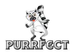 Purrfect - RaccoonStepOnName