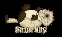 DOTW Saturday - KittySitUps