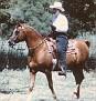 LEWISFIELD MAGIC #28001 (Indian Magic x *Michelia, by *Count Orlando) 1964 chestnut stallion bred by Mrs EM Thomas