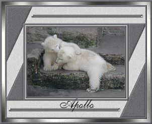 Apollo-gailz0207-bearcubs.jpg