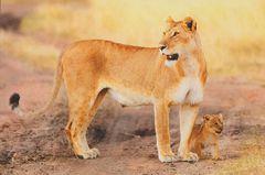 05- Lion NA