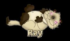 Ray - KittySitUps