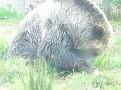 SF zoo 16