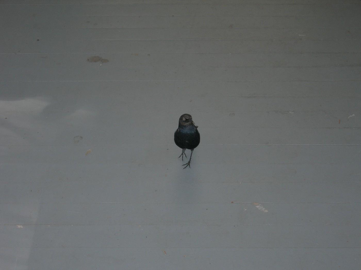 Wawona Visitor