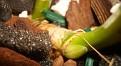 Cattleya trianaei el arenal (3)
