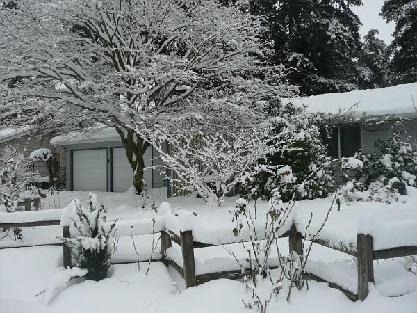 Snow Winter 007