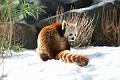 070216 Natl Zoo225