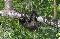 Wet sloth