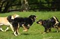20070513 - Westport Dogs - 08-sm
