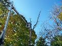 Trees 030