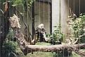 1995 Bronx Zoo 15