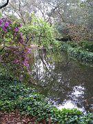 Descano Gardens12