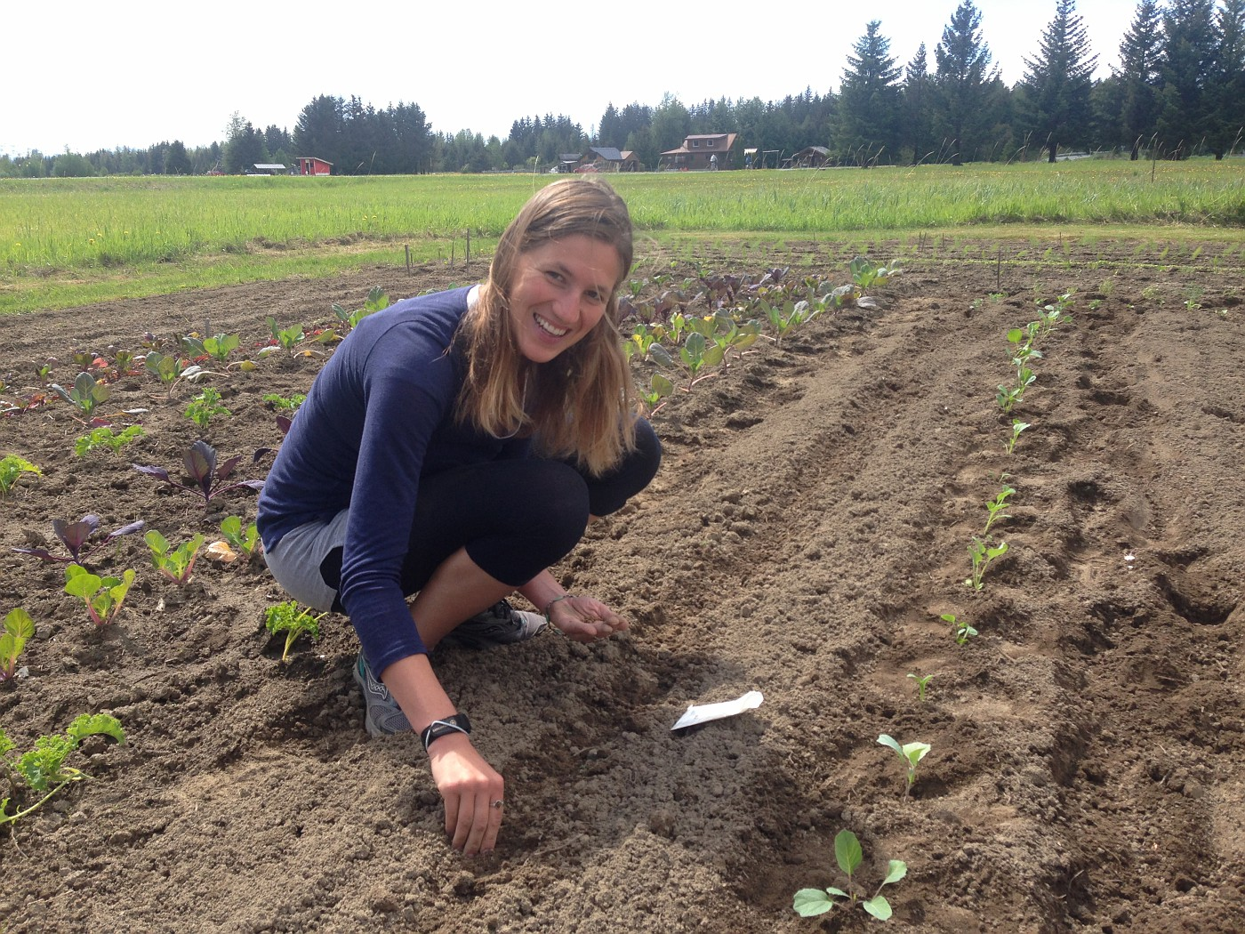 Planting cabbage, kale, and other starts