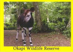 Congo Dem Rep - OKAPI NA