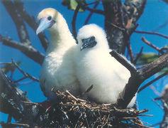 Diego Garcia - BOOBIES NB