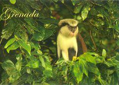 Grenada - MONA MONKEY NA