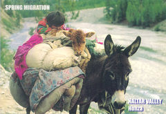 Pakistan - Naltar Valley Spring Migration NT